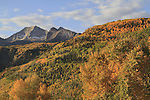 Mountain view from McCLure Pass  near Aspen, Colorado,USA John offers autumn photo tours throughout Colorado.