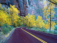 Road with fall color. Zion National Park, Utah.