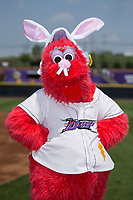 Winston-Salem Dash mascot Bolt dresses up in bunny ears and a nose for Easter Sunday prior to the game against the Buies Creek Astros at BB&T Ballpark on April 16, 2017 in Winston-Salem, North Carolina.  The Dash defeated the Astros 6-2.  (Brian Westerholt/Four Seam Images)