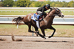 #38Fasig-Tipton Florida Sale,Under Tack Show. Palm Meadows Florida 03-23-2012 Arron Haggart/Eclipse Sportswire.