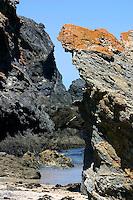 Tollgate Islands, New South Wales South Coast and Coastal Island bird surveys