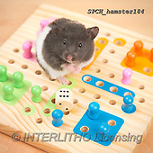 Xavier, ANIMALS, REALISTISCHE TIERE, ANIMALES REALISTICOS, photos+++++,SPCHHAMSTER184,#A#, EVERYDAY ,funny