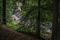 Peloton up the 'La Houppe'. <br /> <br /> 71th Halle Ingooigem 2018 (1.1)<br /> 1 Day Race: Halle > Ingooigem (197.7km)