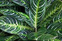 Leaf pattern close up