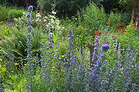 Unser Naturgarten in Hammer, Garten, insektenfreundlicher Garten, vogelfreundlicher Garten, blütenreich, Wildblumen, Wildblumengarten, Natternkopf, Natternzunge, Echium vulgare