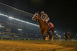 DUBAI,UNITED ARAB EMIRATES-MARCH 26: California Chrome,ridden by Victor Espinoza,wins the Dubai World Cup at Meydan Racecourse on March 26,2016 in Dubai,UAE (Photo by Kaz Ishida)