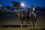 HALLANDALE BEACH, FL - JANUARY 25: Stellar Wind comes off the track after training for the Pegasus World Cup Invitational at Gulfstream Park Race Track on January 25, 2018 in Hallandale Beach, Florida. (Photo by Alex Evers/Eclipse Sportswire/Breeders Cup)