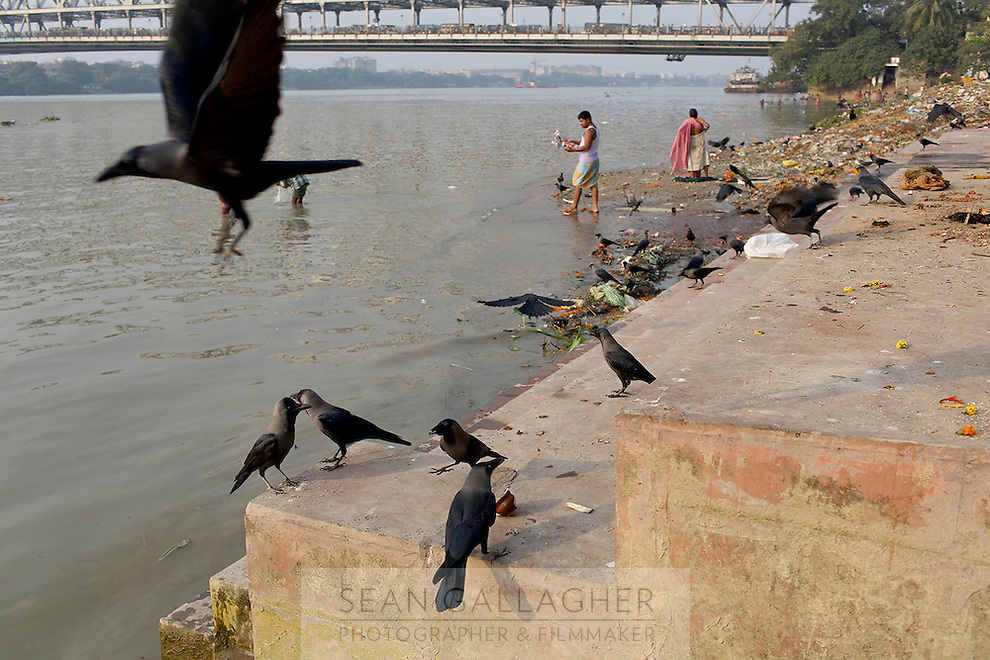 Crows gather on the banks of the Ganges River in central Kolkata.<br /> <br /> To license this image, please contact the National Geographic Creative Collection:<br /> <br /> Image ID: 1925770<br />  <br /> Email: natgeocreative@ngs.org<br /> <br /> Telephone: 202 857 7537 / Toll Free 800 434 2244<br /> <br /> National Geographic Creative<br /> 1145 17th St NW, Washington DC 20036