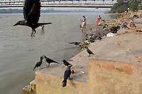 Crows gather on the banks of the Ganges River in central Kolkata.<br />