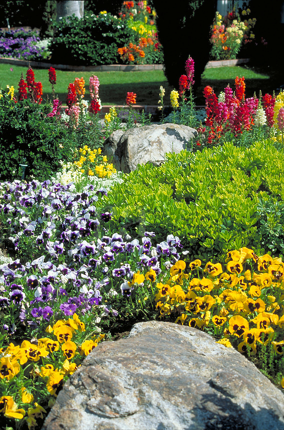 landscaped garden featuring snap dragons and pansies. California.