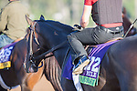 OCT 28 2014:Tourist, trained by William I. Mott, exercises in preparation for the Breeders' Cup Mile at Santa Anita Race Course in Arcadia, California on October 28, 2014. Kazushi Ishida/ESW/CSM