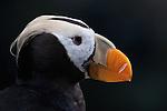 Arctic Seabirds