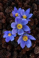 Flowers of the Yukon