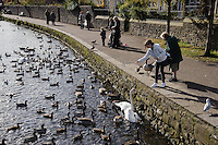 Feeding birds on the river Wye, Bakewell, Derbyshire.
