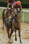 HOT SPRINGS, AR - JANUARY 16: Robby Alvarado aboard Salute The Warrior (9) in the 5th race on Martin Luther King Day at Oaklawn Park on January 16, 2017 in Hot Springs, Arkansas. (Photo by Justin Manning/Elipse Sportwire/Getty Images)