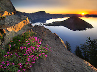 Sunrise and penstemon. Crater Lake National Park, Oregon