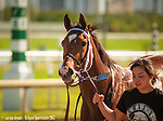 HALLANDALE BEACH, FL - December 2nd: #6 Mended, heads to the barn with her smiling charge after taking the $110,000 Claiming Crown Glass Slipper on Opening Day at Gulfstream Park, Hallandale Beach, FL. Mended is a 4 year old filly by Broken Vow out of an Awesome Again mare. (Photo by Carson Dennis/Eclipse Sportswire/Getty Images.)