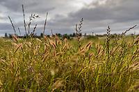 Wild grass under overcast skies at an urban oasis, a regional park near the Oakland International Airport.