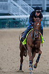 APRIL 30, 2015: Far Right, trained by Ron Moquett, exercises in preparation for the 141st Kentucky Derby at Churchill Downs in Louisville, Kentucky. Jon Durr/ESW/Cal Sport Media