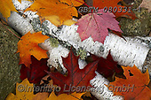 Tom Mackie, STILL LIFE STILLEBEN, NATURALEZA MORTA, photos+++++,GBTM080331-1,#i#, EVERYDAY ,autumn,fall ,leaves