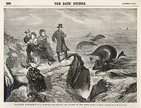 Sea monster seen by several people off Kilkee Ireland / The Day's Doings vol3 , 21 October 1871 page 208 / 1871