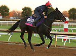 Oodnadatta, trained by trainer Mrs. John Harrington, exercises in preparation for the Breeders' Cup Juvenile Fillies Turf at Keeneland Racetrack in Lexington, Kentucky on November 4, 2020.