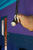 An oryx head hangs above the painted panelling in the living room