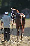 July 18, 2015: Sheer Drama leaves the track after her win. Sheer Drama, Joe Bravo up, wins the Grade I Delaware Handicap, one and 1/4 miles for fillies and mares 3 and upward at Delaware Park in Stanton DE.  Trainer is David Fawkes, owner is Harold L. Queen. Joan Fairman Kanes/ESW/CSM