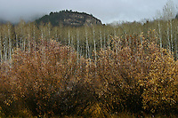 Fall is nearly done,  winter is nearly here near Bear Lake, Utah.