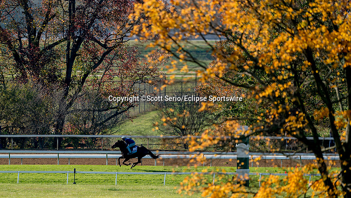 November 1, 2020: Gypsy King, trained by trainer Wesley A. Ward, exercises in preparation for the Breeders' Cup Juvenile Turf at Keeneland Racetrack in Lexington, Kentucky on November 1, 2020. Scott Serio/Eclipse Sportswire/Breeders Cup /CSM