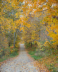 Parke County, IN: Country lane in fall