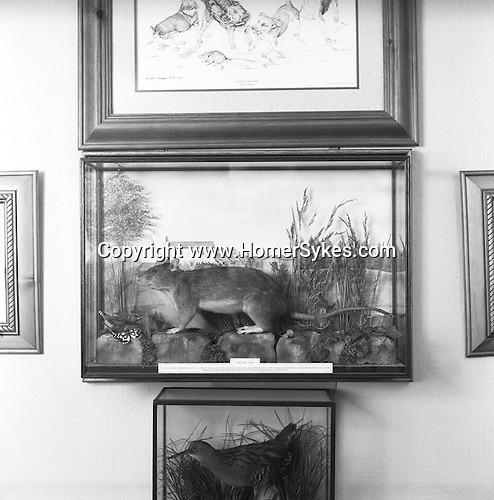 """Rat and Rabbit and Lurcherwork. The Royal Albert Ratting Club. """"Rattus Norvegicus Originally caught at  Carr House Farm, Howsbrook, Barnsley, Yorkshire  by Meg, Sandy, and others in June 2001."""" It measured 20.5 inches long and weighed 1 Ib, 7 oz, and is now displayed in the home of club member, Brian Oliver. Barnsley, Yorkshire...Hunting with Hounds / Mansion Editions (isbn 0-9542233-1-4) copyright Homer Sykes. +44 (0) 20-8542-7083. < www.mansioneditions.com >.."""