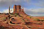 Dried tree stump with the Mitten rock formation in Monument Valley Navajo Tribal Park, Arizona, USA. . John offers private photo tours in Monument Valley and throughout Arizona, Utah and Colorado. Year-round.