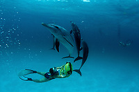 freediver with scooter, playing with Atlantic spotted dolphins, Stenella frontalis, Bahamas, Caribbean Sea, Atlantic Ocean