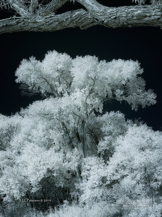 Cottonwood, Oak Creek Valley, Arizona (Infrared)