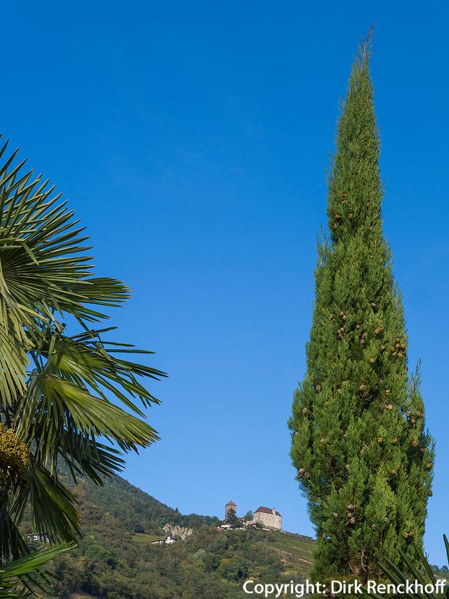 Palmengarten vom Ruster, Schloss Tirol, Algund bei Meran, Region Südtirol-Bozen, Italien, Europa<br /> Ruster Palm tree garden,  castle Tyrol, Lagundo near Merano, Region South Tyrol-Bolzano, Italy, Europe