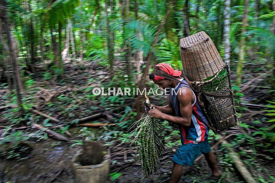 Colheita de açai, Comunidade Pedras. Ilha de Marajo. Para. 2010. Foto de Ubirajara Machado.