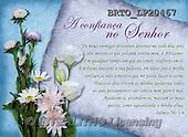 Alfredo, FLOWERS, BLUMEN, FLORES, paintings+++++,BRTOLP20467,#F# ,parchment,