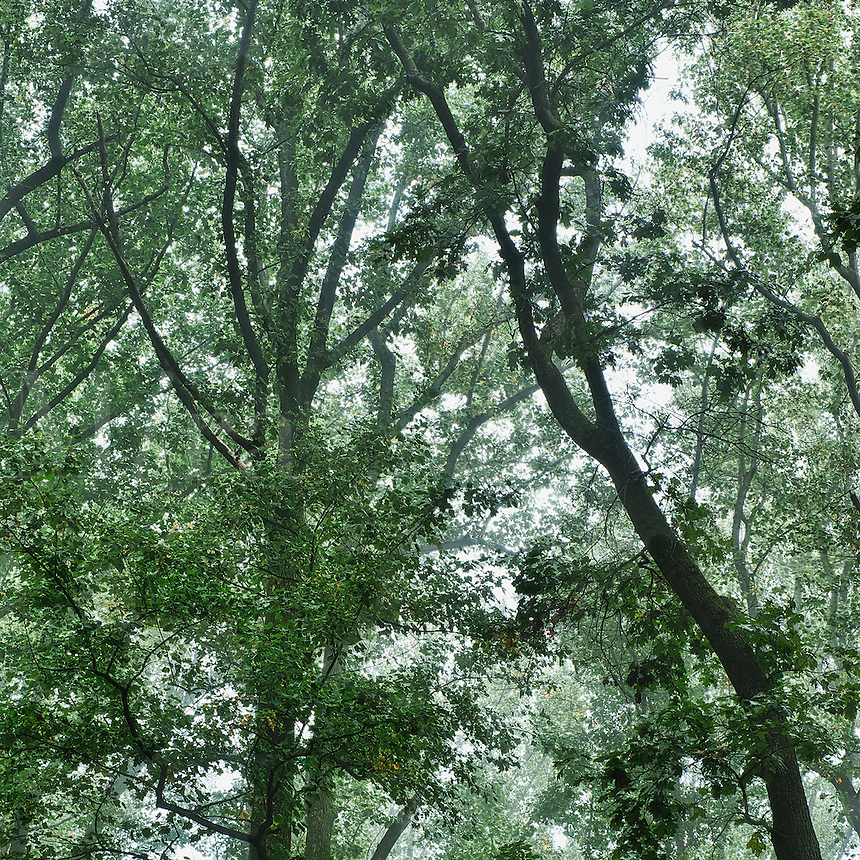 Forest canopy.