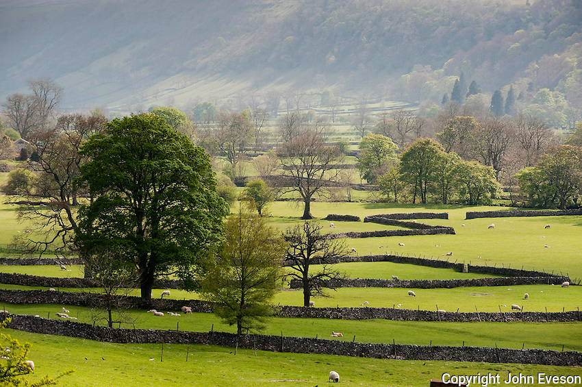 Grass fields and stone walls, Buckden, North Yorkshire.