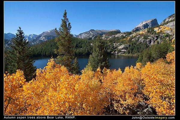 Autumn aspen trees above, Bear Lake, RMNP.