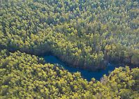 Batsto River & Pine Barren Forest, Wharton State Forest, New Jersey