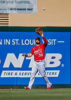 29 February 2020: St. Louis Cardinals outfielder Austin Dean pulls in a fly ball during a Spring Training game against the Washington Nationals at Roger Dean Stadium in Jupiter, Florida. The Cardinals defeated the Nationals 6-3 in Grapefruit League play. Mandatory Credit: Ed Wolfstein Photo *** RAW (NEF) Image File Available ***