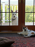 """Crabby smug Calico cat revels in being """"in"""" while dog waits patiently, ouside"""
