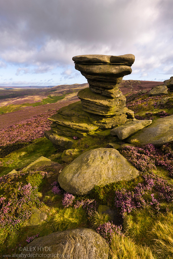 The Salt Cellar, a famous gritstone outcrop, surrounded by flowering heather. Derwent Edge, Peak District National Park, UK. September.