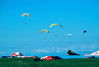 Paragliders and a lone hang glider share the boyant air of the California coast above Black's Beach near the University of California at San Diego gliderport. La Jolla, California.