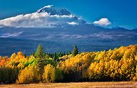 Mt. Adams with fall colored aspens as seen from Conboy Lake National Wildlife Refuge, Washington