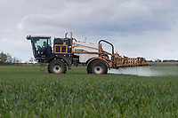 29-4-2021 Spraying Winter wheat with fungicide <br /> ©Tim Scrivener Photographer 07850 303986<br />      ....Covering Agriculture In The UK....