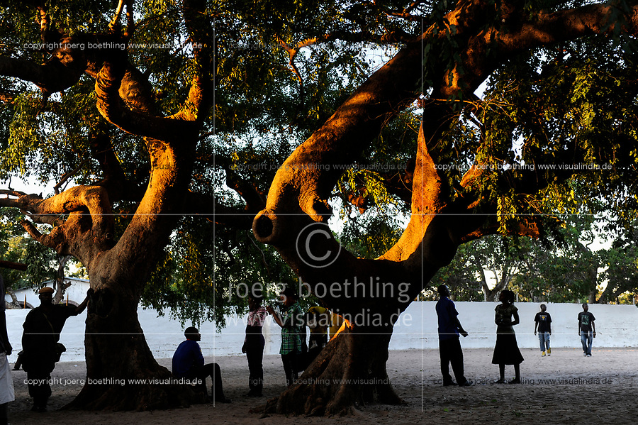 Zambia, Barotseland, people under large tree with last sunlight at dawn
