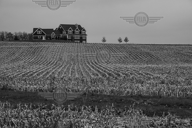 A field of crop stumps in Overisel Township where, in 2016, 84% of the people in this predominantly white rural community voted for Donald Trump.
